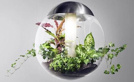 Växter piggar upp kontoret och gör under för luften.